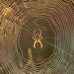 Lightbox Spiders