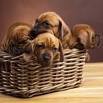 Leuchtkasten Hunde