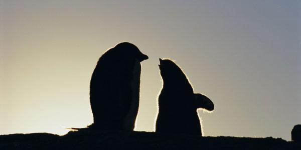 Entdecken Sie die Antarktis bei PantherMedia